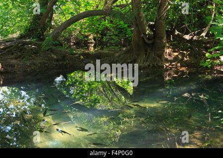 Fisch im Krka Nationalpark in Kroatien - Stockfoto
