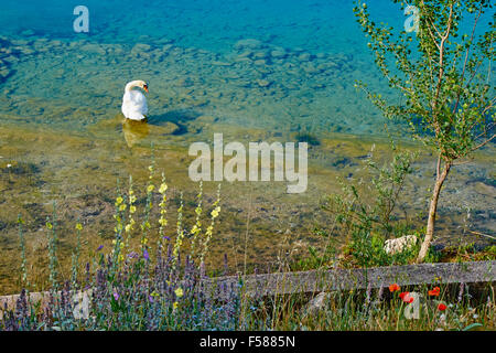 Kroatien, Dalmatien, Sibenik-Knin, Krka Nationalpark, Schwan, römisch-katholische Franziskaner Kloster Visovac - Stockfoto