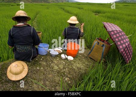 Einige Hmong Frauen neben einem Reisfeld in Sapa Weg zu den nahe gelegenen Dörfern der Lao Chai und Ta Van Essen. - Stockfoto
