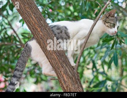 Wilde Katze auf den Baum klettern. - Stockfoto