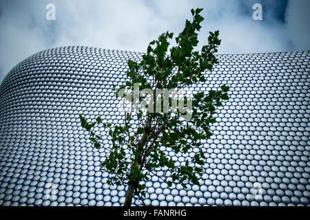 Ein einsamer Baum gegen die Ultra moderne Struktur des Speichers Selfridges im Stadtzentrum von Birmingham, UK. - Stockfoto