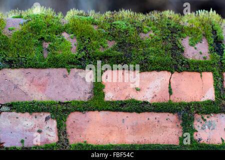 Ziegelmauer mit Moos bedeckt - Stockfoto