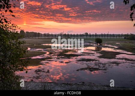 Niederlande, Schinveld, Natur behalten Roode Beek. Feuchtgebiet. Sunrise - Stockfoto