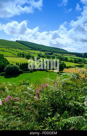 Irland-Irisch-grün Landschaft Bauernhof Rinder Schafe uk - Stockfoto
