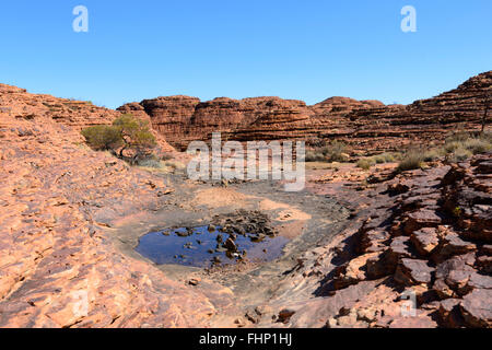 Rock Pool entlang der Rim-Spaziergang am King's Canyon, Northern Territory, NT, Australien - Stockfoto