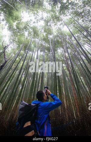 Niedrigen Winkel Sicht des Menschen fotografieren In Bambus-Groove - Stockfoto