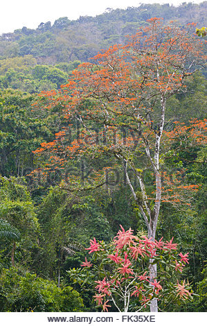 Regenwald in Kana im Nationalpark Darien, Republik von Panama. - Stockfoto