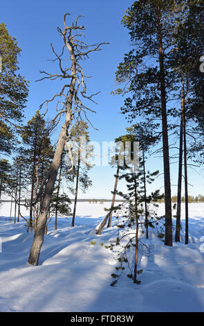 Winterlandschaft am Inari-See in Finnland - Stockfoto