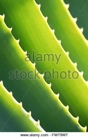 Saftige hautnah - Stockfoto