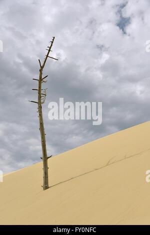 Toter Baum am berühmten Düne von Pilat, befindet sich in La Teste-de-Buch im Bereich d ' Arcachon in Frankreich - Stockfoto