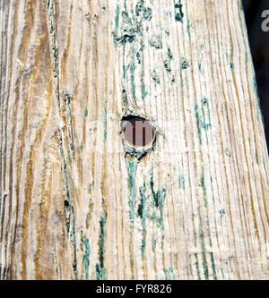 schmutzige Metall Nagel entfernt Farbe in die braune Holztür und rostigen gelb - Stockfoto