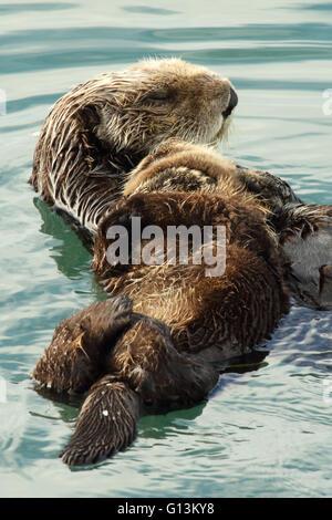 Sea Otter Mutter ihr schlafendes Baby festhalten. - Stockfoto