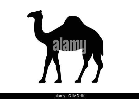 Ein Dromedar oder Kamel ClipArt-Grafiken für Schilder - Stockfoto