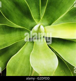 Pflanze-abstrakt - Stockfoto