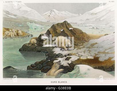 Eine Gruppe von Eisbären in einer eisigen Landschaft.  Man hat einen Fisch gefangen und warnt die anderen mit einem - Stockfoto