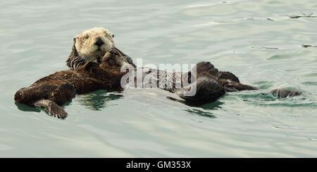 Sea Otter Mutter hält ihr Baby beim schweben im Ozean. - Stockfoto