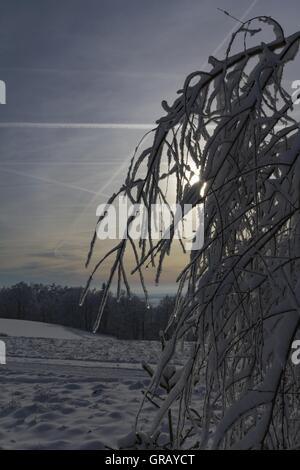 Schneebedeckte Zweige im Gegenlicht - Stockfoto