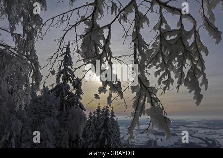Schneebedeckte Zweige im Gegenlicht vor Winterlandschaft - Stockfoto