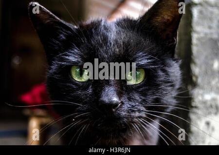 Porträt von schwarzes Kätzchen von großen grünen Augen - Stockfoto