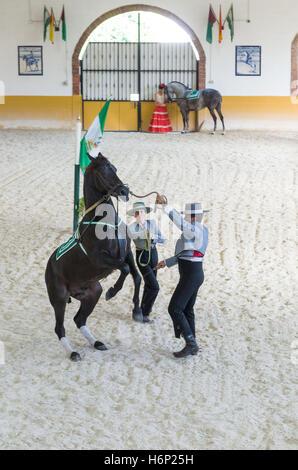 Tanzende Andalusier - Stockfoto