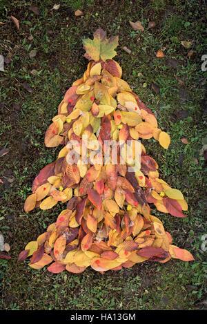 Weihnachten Baum Blätter aus - Stockfoto