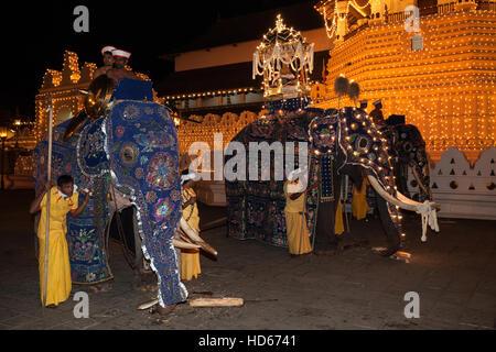 Elefanten, Dalada Gruppe mit Heiligen Elefanten Maligawa Raja, tragen Zahntempel, buddhistische Festival Esala dekoriert - Stockfoto