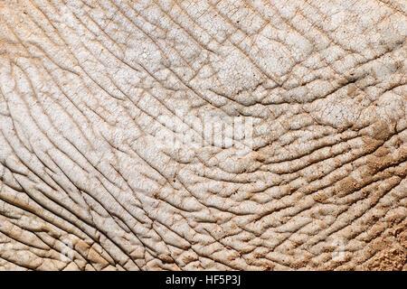 Elefanten Haut abstrakte Textur Hintergrund - Stockfoto