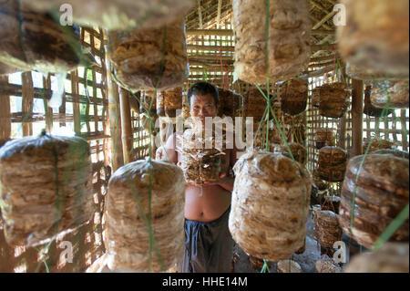 Ein Mann hält einen Korb der Anbau von Pilzen in einer Pilz Hütte, Chittagong Hill Tracts, Bangladesch - Stockfoto