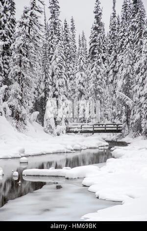 Verschneite Winterlandschaft & hölzerne Fußgängerbrücke; Emerald Lake; Yoho-Nationalpark; Britisch-Kolumbien; Kanada - Stockfoto