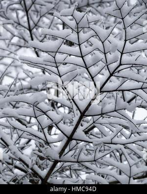 Dieses schwarz / weiß suchen abstrakte Muster ist zufällig und geometrischen und recht hübsch.  Es zeigt die Unterseite - Stockfoto