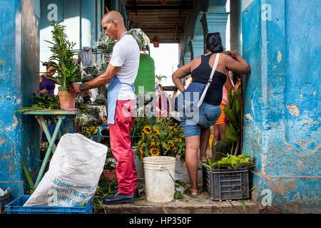 Blumengeschäft männliche Vorbereitung Blüten blühen shop, Habana Vieja-Bezirk, La Habana, Kuba - Stockfoto