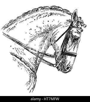 Andalusier, spanische Pferd Porträt mit Trense Hand Zeichnung illustration - Stockfoto