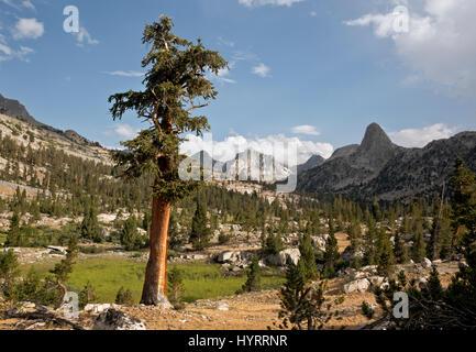 CA03178-00... Kalifornien - Fin-Kuppel und der Distelfalter aus Sicht in der Nähe von Lake Arrowhead im Kings Canyon - Stockfoto