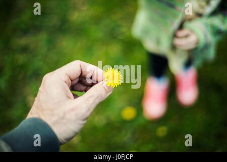 Vater und Tochter Konzept, Löwenzahn in die Hand des Menschen und ein kleines Mädchen im unscharfen Hintergrund. - Stockfoto