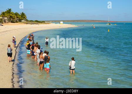 SHARK BAY, MONKEY MIA, Australien - 9. Januar 2016 Dolphin Resort, Touristen auf den Strand, Western Australia, - Stockfoto