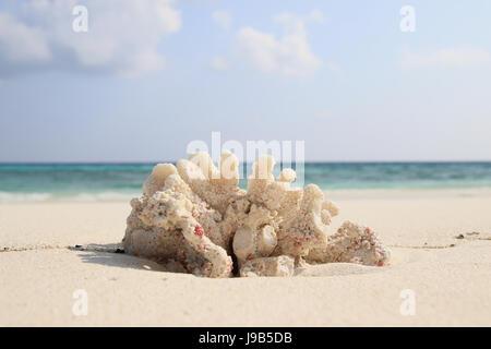 Korallen am Strand von Ukulhas, Malediven - Stockfoto