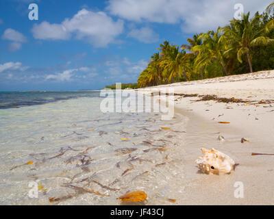 Lagoon Beach Mustique, einem ruhigen und sanften Strand gut für Kinder und Schnorcheln - Stockfoto