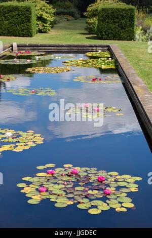 Waterlily Teich in Waterperry Gärten, in der Nähe von Oxford, Oxfordshire, England - Stockfoto