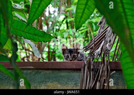 Wenig Neugierig und verängstigt graue Kätzchen auf einem Zaun unter dem Grün - Stockfoto