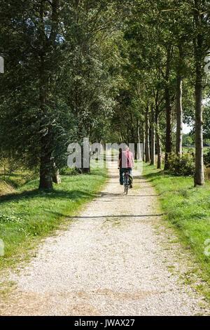 Mann, Radfahren, von Bäumen gesäumten Straße in Dal van de Roode Beek, Feuchtgebiete, Wiesen, Nature Reserve in - Stockfoto