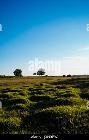 Grüne Gras Landschaft mit 3 Bäume gegen einen klaren blauen Himmel eingestellt - Stockfoto