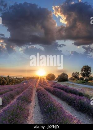 Lavendel Feld gegen Sonnenuntergang in der Provence, Frankreich - Stockfoto