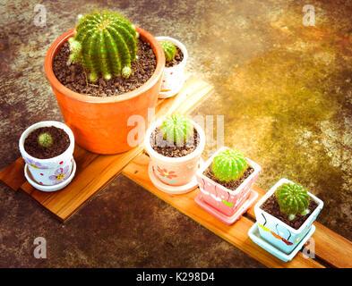 Satz von Kaktus auf der Holzplatte vor home Garten. - Stockfoto