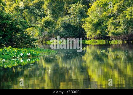 Brasilien, Pantanal, ursprüngliche Flusslandschaft des Rio Claro, - Stockfoto