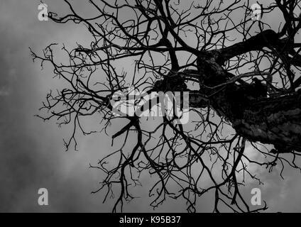 Silhouette toter Baum am dunklen Himmel Hintergrund für furchtsam oder Tod - Stockfoto