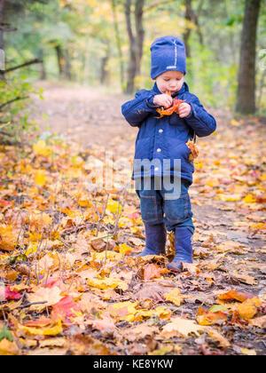 Junge herauf Blätter im Herbst im Wald - Stockfoto