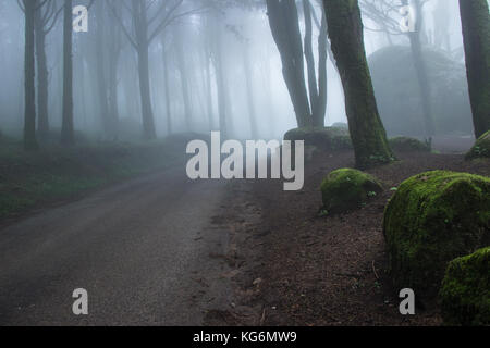 Geheimnisvoll dunklen alten Wald mit Nebel in die Berge von Sintra in Portugal - Stockfoto