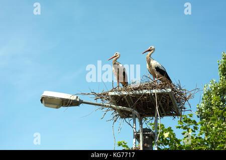 Ein paar Störche in ihrem Nest hoch oben auf der Straßenlaterne - Stockfoto