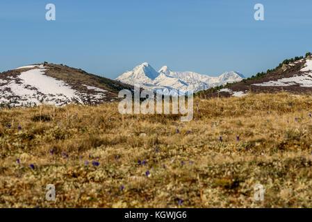 Malerische Aussicht mit trockenem Gras und Blumen auf einem Hintergrund der Berge mit Schnee an einem sonnigen Tag - Stockfoto