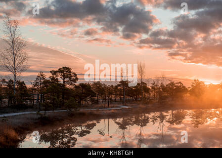 Natur Lettlands. Kemeri Nationalpark. großen Sumpf. - Stockfoto